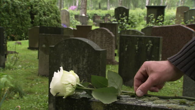 a white rose on a grave, sweden. - grab stock-videos und b-roll-filmmaterial