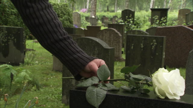 a white rose on a grave, sweden. - gravestone stock videos & royalty-free footage