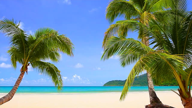white sand beach - tropical climate stock videos & royalty-free footage
