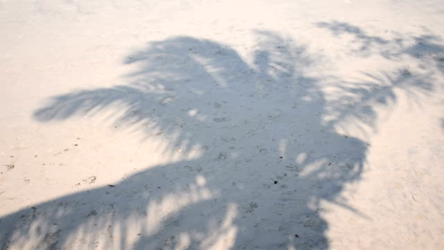 White sand beach with coconut shadow