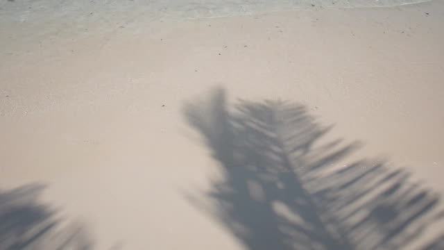 white sand with coconut shadow and sea waves - palm tree stock videos & royalty-free footage