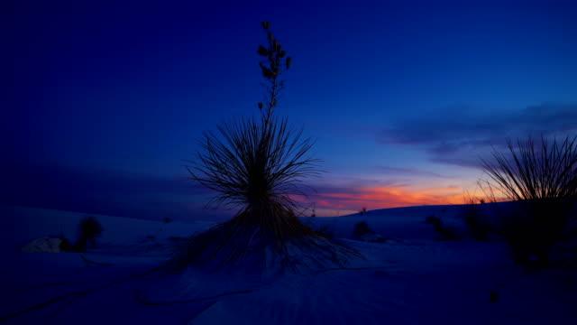 vídeos de stock, filmes e b-roll de monumento nacional das areias brancas, novo méxico - arbusto tropical