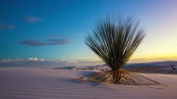 White Sands Time Lapse Cactus Move Right