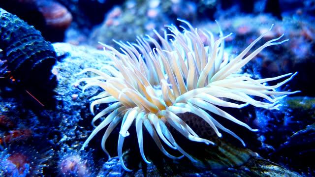 white sea anemone on coral reef - cava video stock e b–roll