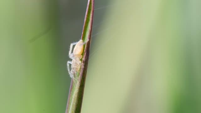 白いクモが草の葉にしがみついています。 - blade of grass点の映像素材/bロール