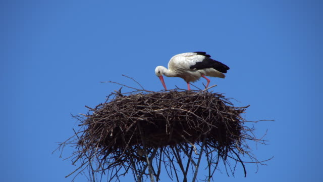 white stork on nest - bird's nest stock videos & royalty-free footage