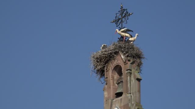 vidéos et rushes de white storks perching on bird nest on clock tower - nid