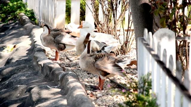 white swan - utebassäng bildbanksvideor och videomaterial från bakom kulisserna