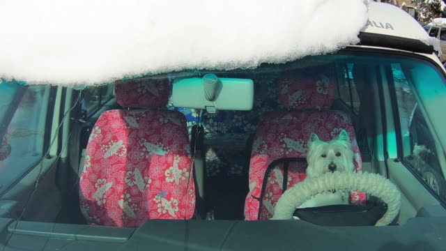 white terrier dog sitting on the driver seat in a car, winter - small stock videos & royalty-free footage