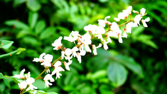 white wild flower - orchid stock videos & royalty-free footage