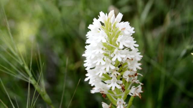 white wildflower - invertebrate stock videos & royalty-free footage