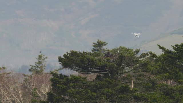 vidéos et rushes de aigle à queue blanche (haliaeetus albicilla) et hélicoptère kuril islands - rapace