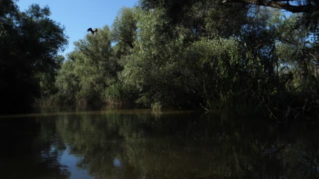 weißschwanzadler (haliaeetus albicilla) - wasserrand stock-videos und b-roll-filmmaterial