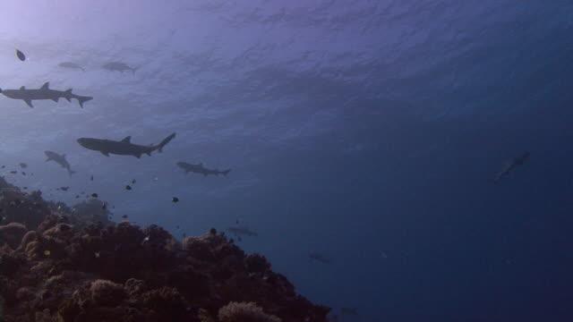 サメネムリ - ネムリフカ点の映像素材/bロール