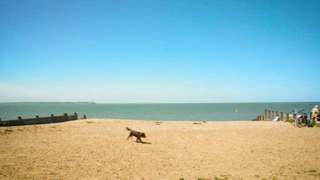 ws whitstable beach on a sunny day, uk - blue dog stock videos & royalty-free footage