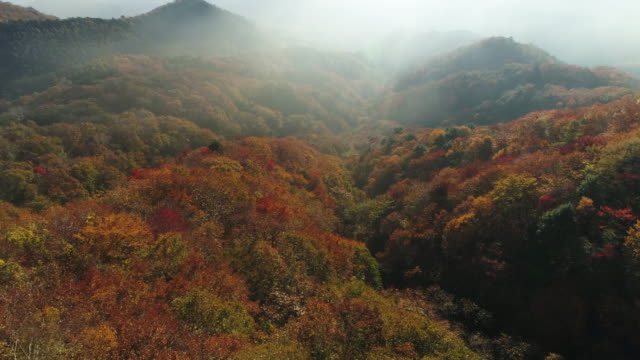 wide aerial, colorful autumn foliage in japan mountains - 青々とした点の映像素材/bロール
