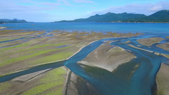 wide aerial moving down river with coastline and a brown bear in the distance - estuary stock videos & royalty-free footage