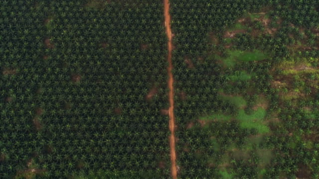wide aerial views of an oil palm plantation, gabon - sustainability stock videos & royalty-free footage