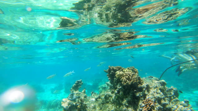 wide angle: a reef under the clear blue ocean of the south pacific in moorea - moorea stock videos & royalty-free footage