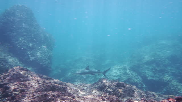 wide angle blacktip reef shark underwater - animal fin stock videos & royalty-free footage