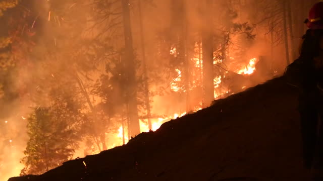 wide angle: burning fire in the forest - forest fire stock videos & royalty-free footage
