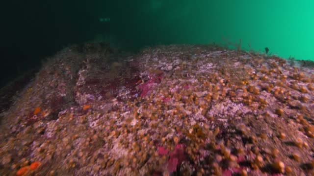 stockvideo's en b-roll-footage met wide angle: crevasses, tube worms and plants on a shelf in the ocean - kokerworm