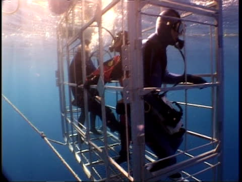 wide angle divers in shark cage, guadalupe island, pacific ocean - aqualung diving equipment stock videos & royalty-free footage