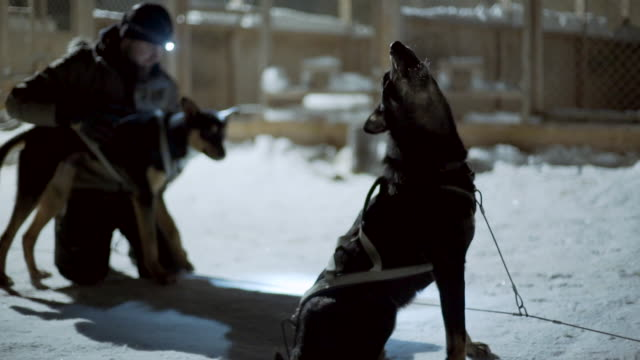 wide angle: dog howling and another dog being pet by a man in the snow - sweden stock-videos und b-roll-filmmaterial