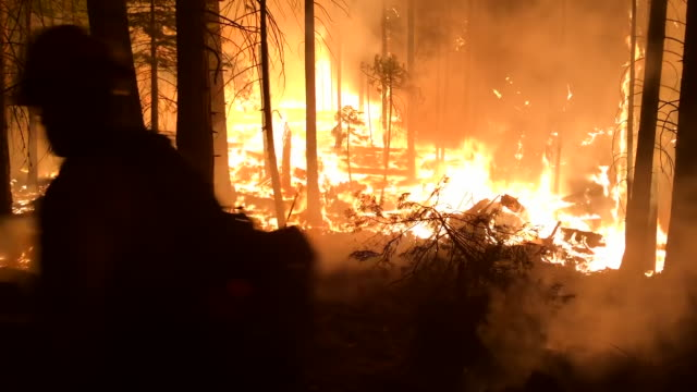 wide angle: firefighter walks by trees on fire - california stock videos & royalty-free footage