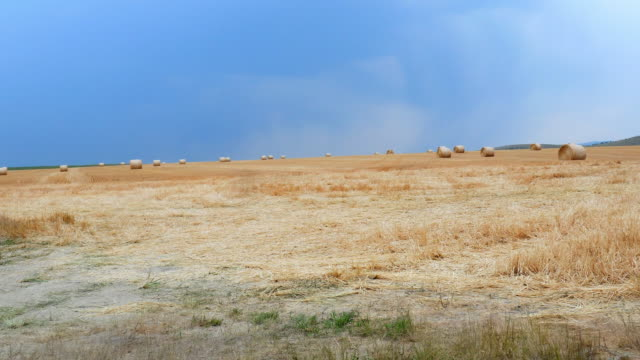 wide angle: hay bales - hay isolated stock videos & royalty-free footage