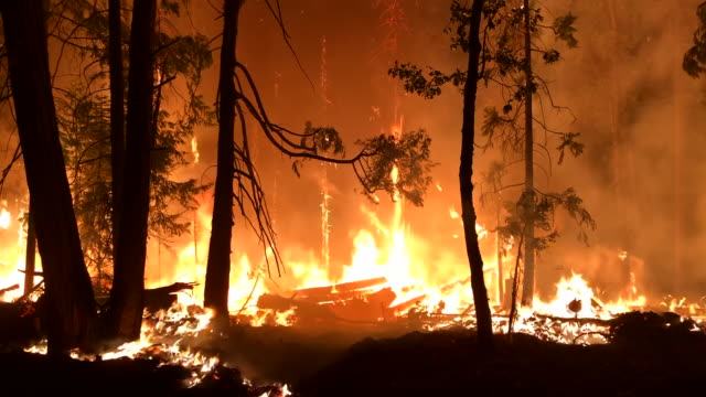 wide angle: orange flames of a fire burning trees - california stock videos & royalty-free footage