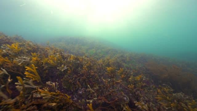 Wide Angle: Sea Plants on a Reef