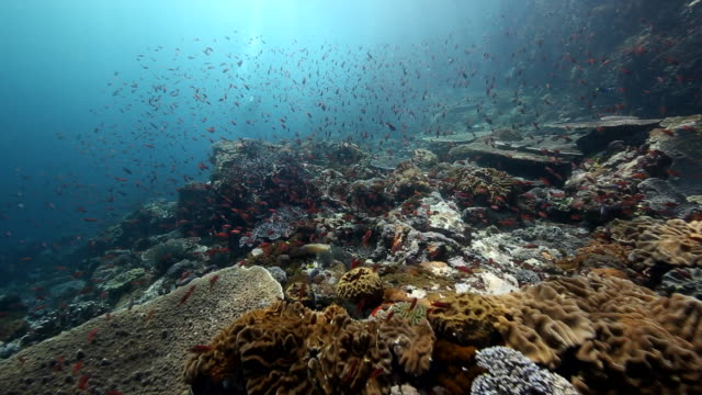 A wide angle shot along the top of a hard coral reef with sun rays