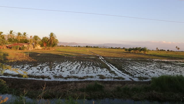 a wide angle shot of a rice field near pilate haiti the mountains are visible in the background while the camera is panning to the right - hispaniola stock videos and b-roll footage