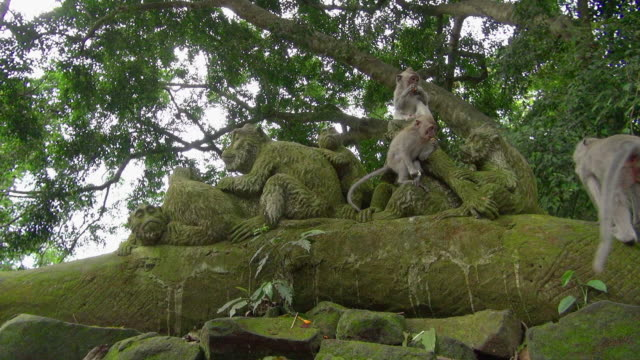 Wide Angle Shot of Monkeys Eating on Statue