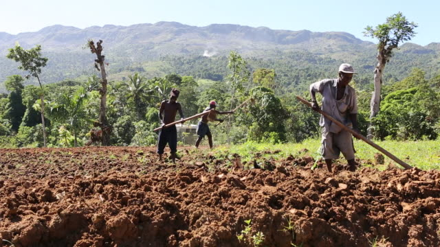 a wide angle shot of three farmers while they are ploughing a field near pilate on a sunny day mountains can be seen in the background - hispaniola stock videos and b-roll footage