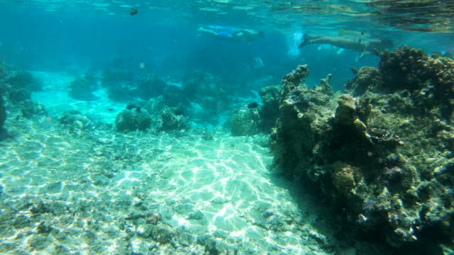 wide angle: snorkelers exploring the reef in the shallow water of the south pacific ocean off moorea - south pacific ocean stock videos & royalty-free footage