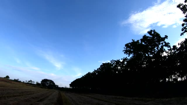 wide angle stubble in rice fields and trees. - stubble stock videos and b-roll footage