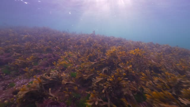 Wide Angle: Sun Shining Through Ocean Onto Sea Plants