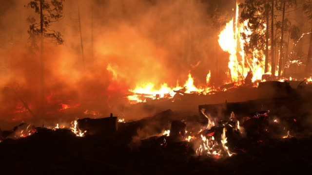 wide angle: trees going up in flames in a forest fire - camp fire stock videos & royalty-free footage
