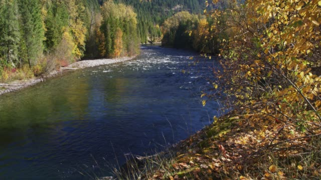 wide, autumn riverbed in british columbia - wide stock videos & royalty-free footage