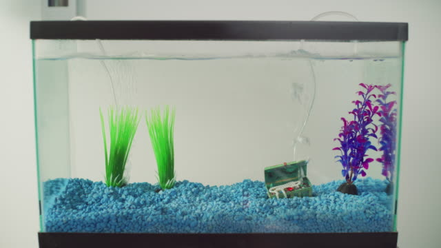 wide comedic shot of a small cheesy empty aquarium with blue gravel a treasure chest bubbler and several plastic plants. but no fish. - elkhorn nebraska stock videos & royalty-free footage