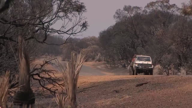 wide establishing shot of a truck driving down a road past vegetation burned by bush fires in australia. - environment or natural disaster or climate change or earthquake or hurricane or extreme weather or oil spill or volcano or tornado or flooding stock videos & royalty-free footage