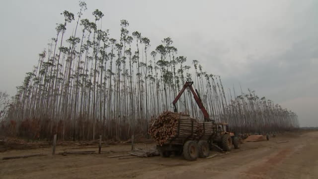 wide establishing shot of a truck loaded with trees cut down after a fire at an amazon rainforest in hondona, brazil. - cut video transition stock videos & royalty-free footage