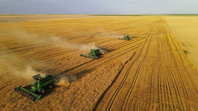 wide high angle aerial shot of combines harvesting mature wheat on summer afternoon - harvesting stock videos & royalty-free footage