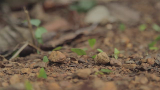 wide line of leafcutter ants - leaf cutter ant stock videos and b-roll footage