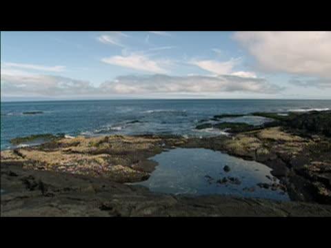 wide locked down shot of coastline / galapagos islands - gezeitentümpel stock-videos und b-roll-filmmaterial