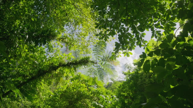 stockvideo's en b-roll-footage met wide low angle shot of tree branches under sky / rouseau, dominica - laag camerastandpunt