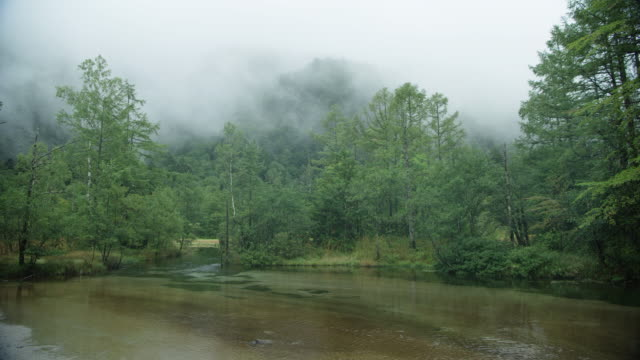wide, lush river landscape in kamikochi national park - lush stock videos & royalty-free footage