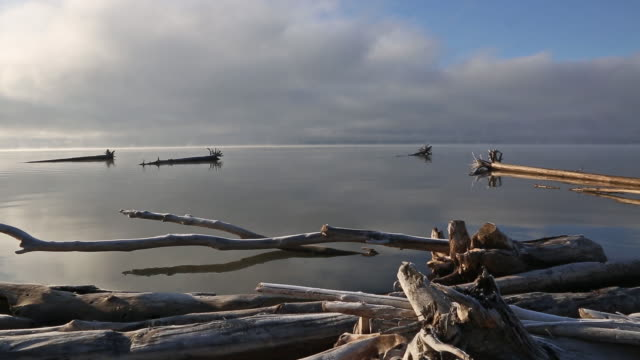 wide pan shot of dead tree trunks and driftwood floating on calm misty lake at sunrise with mist coming off water. - flathead lake stock videos and b-roll footage